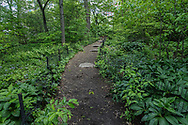 Woodland path to Summit Rock in Central Park