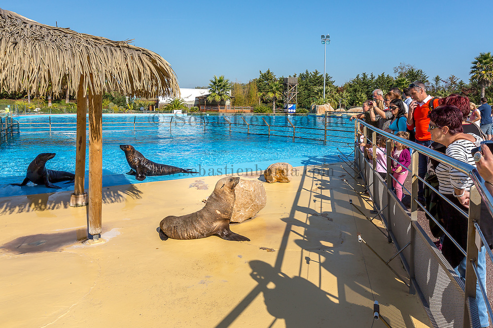 Otaries du parc Marineland d'Antibes // Sea lions of Antibes Marineland park