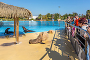 Otaries du parc Marineland d'Antibes // Sea lions of Antibes Marineland park