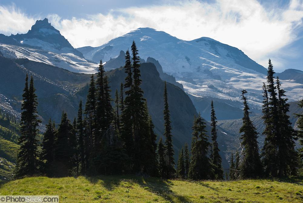 Mount Rainier (14,411 feet elevation) rises high above the Wonderland Trail to Summerland in Mount Rainier National Park, Washington, USA.