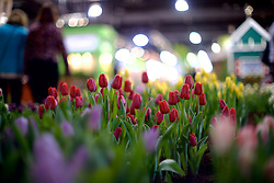 'Explore America' is the theme for the 2016 edition of the Pennsylvania Horticulture Society Flower Show. The annual show, the largest in its kind, is held at the Pennsylvania Convention Center in Center City Philadelphia PA., and runs till March 13.