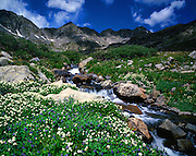 Wildflowers and Stream, Monte Cristo Gulch,  July, Summit County, Colorado,
