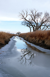 &quot;Reflection at Stillwater, Nevada&quot; - This reflection of the Cottonwood Tree was photographed along Stillwater Rd. in Stillwater, Nevada. <br />