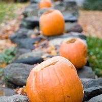 Halloween pumpkins on a stone fence, Connecticut, USA