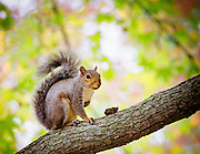 Squirrel Interrupted with Bright Spring Background - At Belmont Lake State Park in West Babylon