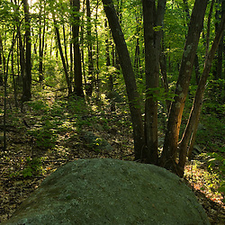 Sunlight enters a forest in Hopkington, Massachusetts.