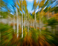 Zooming Through an Autumn Aspen Forest in Colorado. Gone to See America 2013. Image taken with a Nikon 1 V2 camera and 6.7-13 mm VR lens (ISO 160, 13 to 6.7 mm, f/16, 1/8 sec).