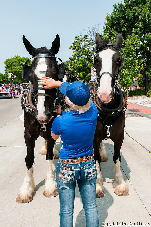 Woman prepares the horses for the Fourth of July parade, Ames, Iowa