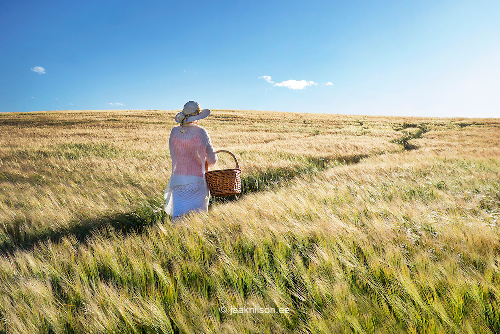 Woman walking on field and holding basket in hand. Track, cornfield, crop and rural landscape in Estonia.