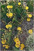 Cactaceae Portfolio VII: Cacti in Habitat
