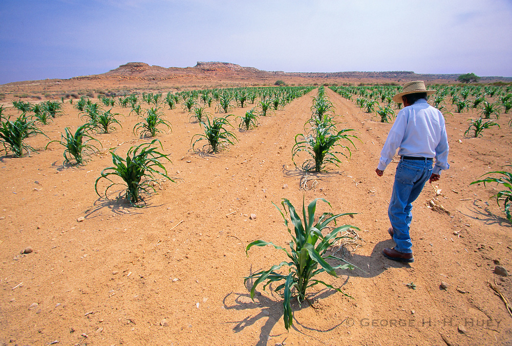 350149-1008 ~ Copyright: George H. H. Huey ~ Hopi Indian farmer, in his rainwater only irrigated corn field. Hopi Indian Reservation, Arizona. Released #125