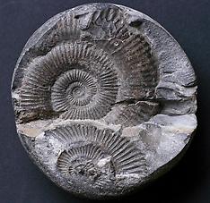 fossils, fossielen