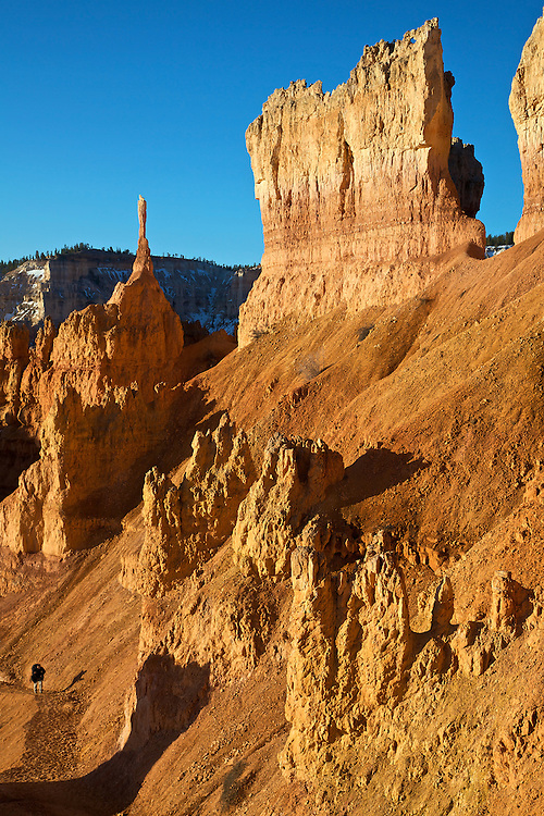 A lone photographer walks among the hoodoos catching the morning's golden light in Bryce Canyon National Park, Utah. Bryce is distinctive due to these geological structures, formed by wind, water and ice erosion of the river and lake bed sedimentary rocks.