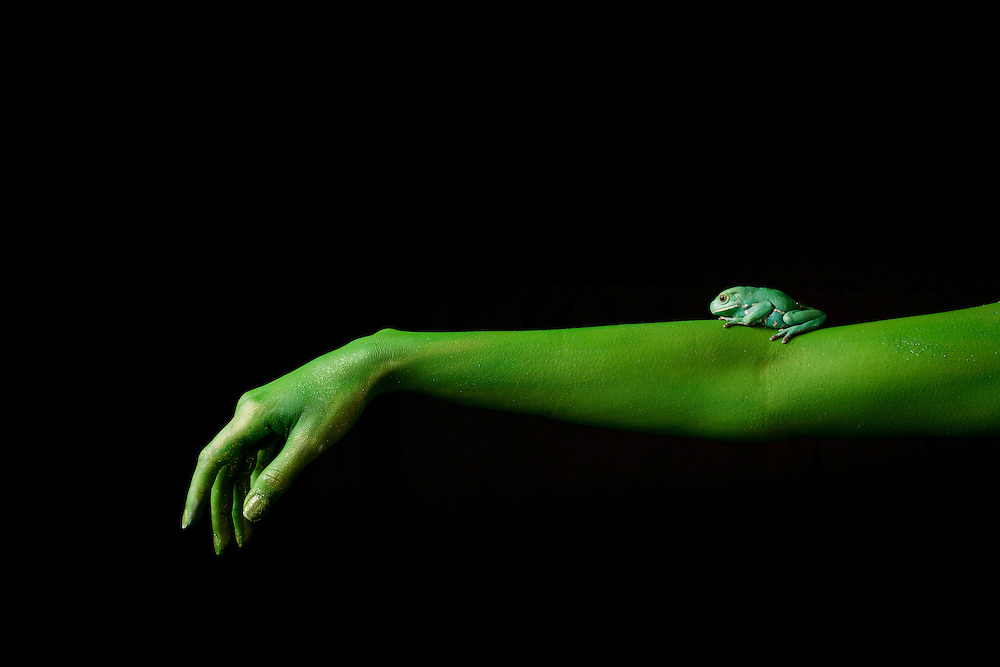 First Place FotoWeek DC 2012, Natural World Portfolio. Metamorphosis. Waxy monkey frog on arm