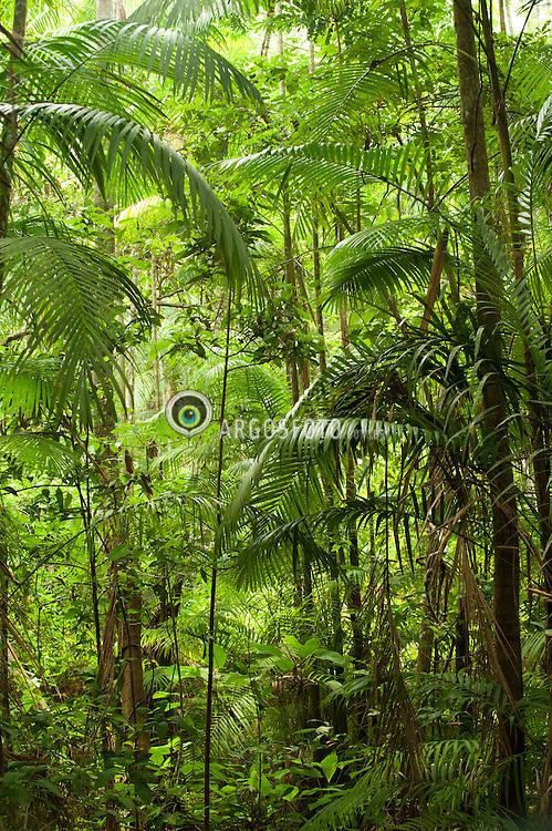 Floresta Nacional do Tapajos, uma Unidade de Conservacao, tipo Floresta Nacional. Esta localizada a oeste do Estado brasileiro do Para, abrangendo os municipios de Belterra, Aveiro, Ruropolis e Placas. Faz limite com o Rio Tapajos, com a rodovia BR 163-Santarem-Cuiaba e com o rio Cupari./ The Tapajos National Forest is a conservation area, like the National Forest. It is located west of the Brazilian state of Para, covering the municipalities of Belterra, Aveiro, Rurópolis and Placas. Borders on the Tapajos River, with the BR-163 Santarem-Cuiaba river and the Cupari.