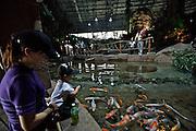 Beijing Aquarium. Rainforest Adventure. Koi (lucky carps).