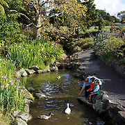 A family feed the ducks at Auckland Botanic Gardens. Auckland, New Zealand, 11th November 2010. Photo Tim Clayton