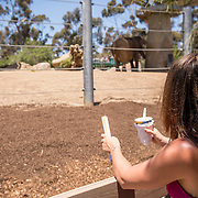 July 13-16, 2016, San Diego, CA:<br /> Alaina Stipcak with the elephants at the San Diego Zoo during a trip to San Diego, California Wednesday, July 13 to Saturday, July 16, 2016. <br /> (Photos by Billie Weiss)