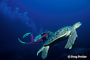 green sea turtle, adult male, Chelonia mydas,  Similan Islands, Thailand ( Andaman Sea - Indian Ocean ) MR 226