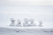 row with smiling snowmen