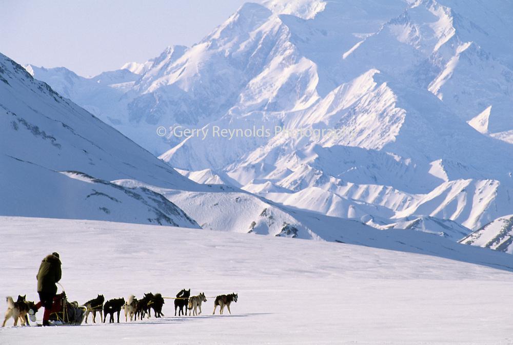 Winter, Snow, Mount McKinley, Mt. McKinley, Dog musher, Dogs, Sled Dog, Dog sled, Dog Sledding, mushing, Denali National Park, Alaska