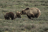 Wild Wyoming Tour Images
