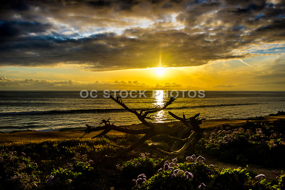 Sunset Over The Pacific Ocean From Carlsbad Cliffs