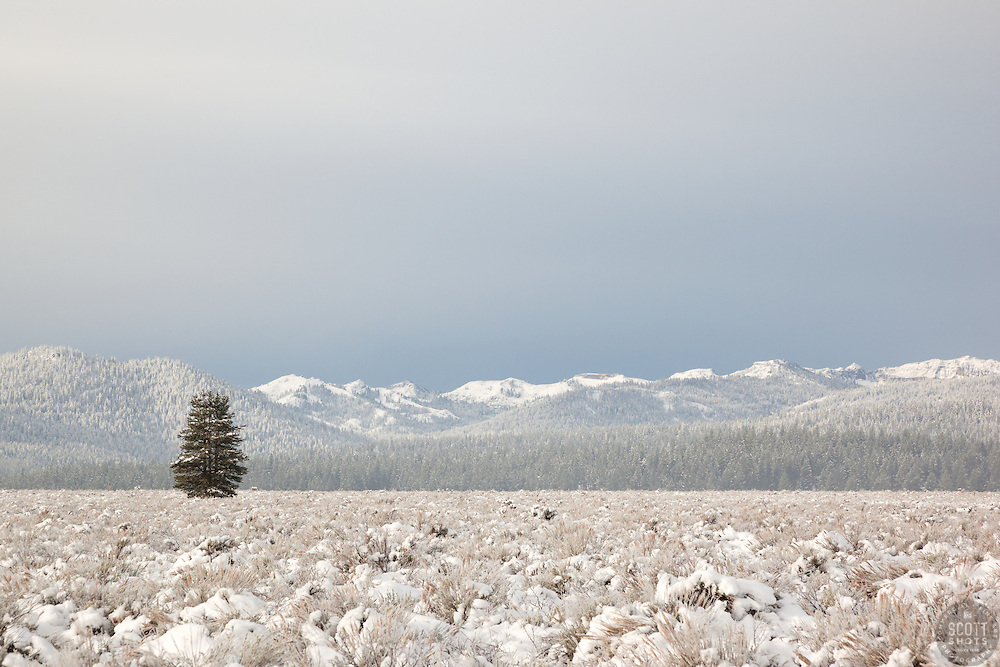 """Snowy Martis Valley 4"" - Photograph of a lone tree in a snow covered Martis Valley in Truckee, California."