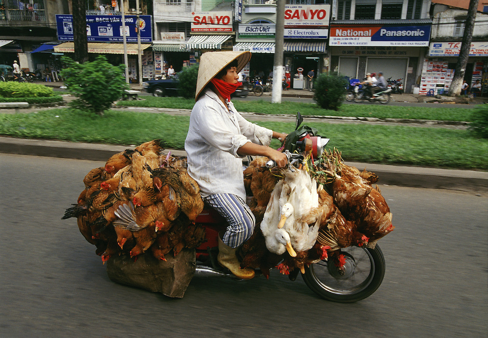 Motorbike in Saigon carrying live chicken and ducks. Vietnam 2003