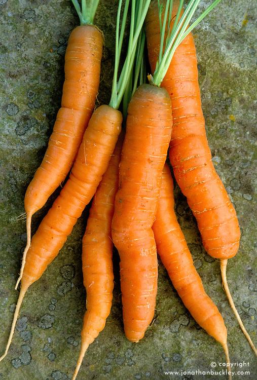 Carrot 'Amini'