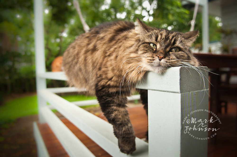 Pet cat sprawled over verandah railing