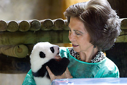05.11.2010, Zoo, Madrid, ESP, Queen Sofia visited the two Giant Pandas borned at Madrid Zoo last september 5th. EXPA Pictures © 2010, PhotoCredit: EXPA/ Alterphotos/ Cesar Cebolla +++++ ATTENTION - OUT OF SPAIN / ESP +++++