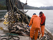 Alaska., Prince Wililam Sound, Commercial fishing to harvest salmon in summer.