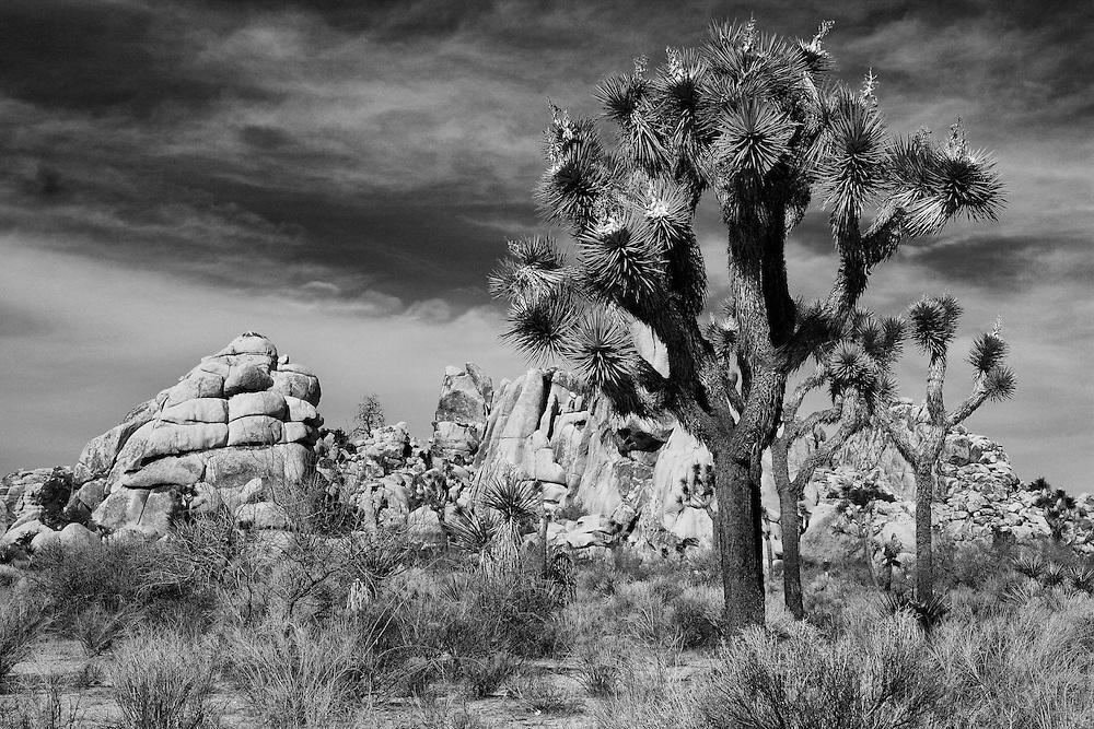 Joshua Tree Rock Outcropping - Infrared Black & White