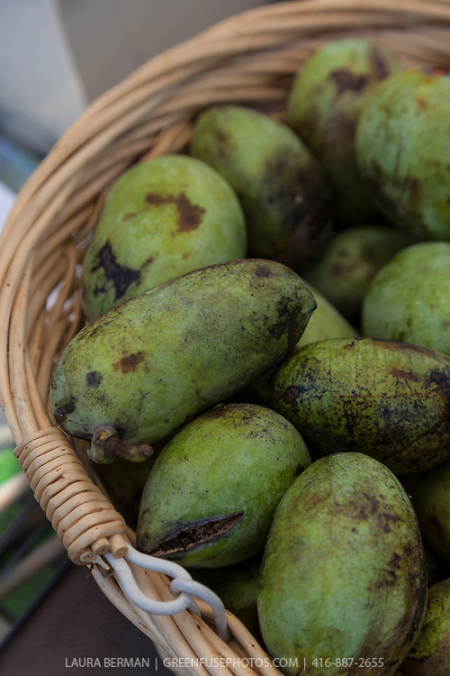 The edible fruit of the Pawpaw tree, a NorthAmerican native tree, at a farmers market (Asimina triloba).