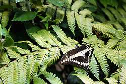 July 2007: Butterfly, Chattanooga Aquarium.  Attractions near Chattanooga Tennessee. Point Park, National Park Service - Lookout Mountain, TN. (Photo by Alan Look)