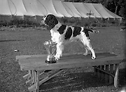 """04/08/1952 <br /> 08/04/1952<br /> 04 August 1952  <br /> Dog Show, 18th Annual Green Star Championship at Monkstown, Co. Dublin. Mr. F.J. Burton's, 15 Ardpatrick Gardens, Belfast,  English Springer Spaniel """"Pasty of Ardrick"""" who won the Trophy for Best in Show Award."""