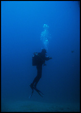 Scuba diving in the Atlantic Ocean