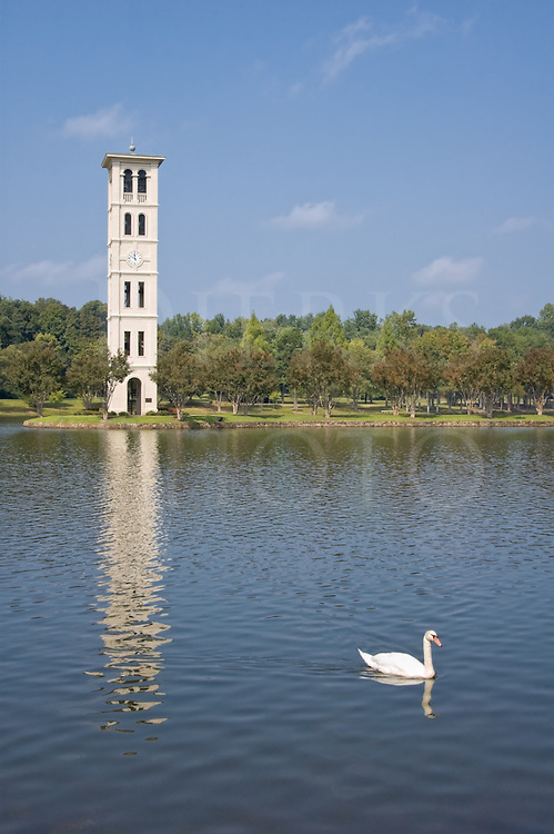Picture of carillon clock tower and lake with white swan at Furman College, Greenville, SC
