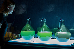 "© Licensed to London News Pictures. 11/09/2018. LONDON, UK. A visitor views ""Algae Lab"", designed by Studio Klarenbeek & Dros at Atelier Luma, a factory line that 3D prints in algae, at a preview of the 87 nominees for the eleventh Beazley Designs of the Year exhibition and awards at the Design Museum in Kensington.  The exhibition runs 12 September to 6 January 2019 and celebrates the most innovative designs of the last year.  Photo credit: Stephen Chung/LNP"