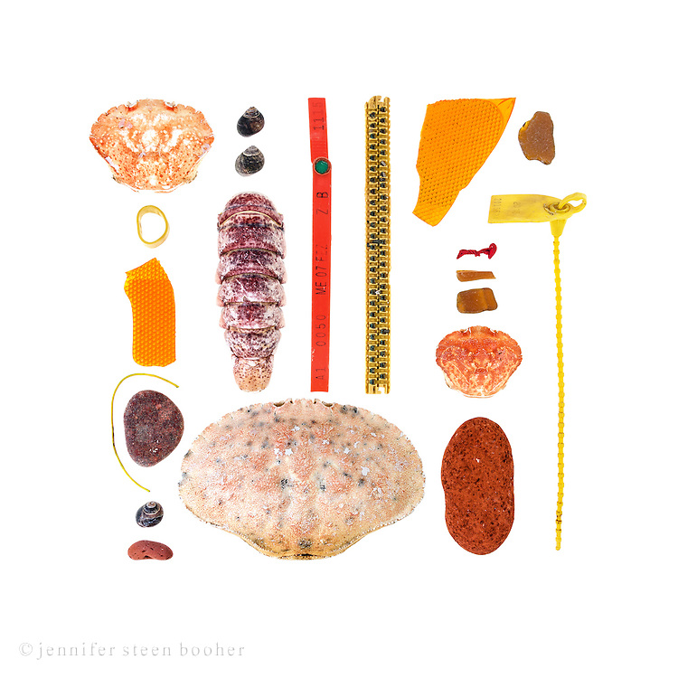 European Green Crab shells (Carcinus maenas), lobster-claw band, plastic tail-light fragments, plastic-coated wire, beach stones, Common Periwinkles (Littorina littorea), sea brick, Lobster tail (Homarus americanus), lobster trap tag, mysterious thing that might be computer-innards, Rock Crab (Cancer irroratus), balloon tail,  sea glass, fishing-industry tag.
