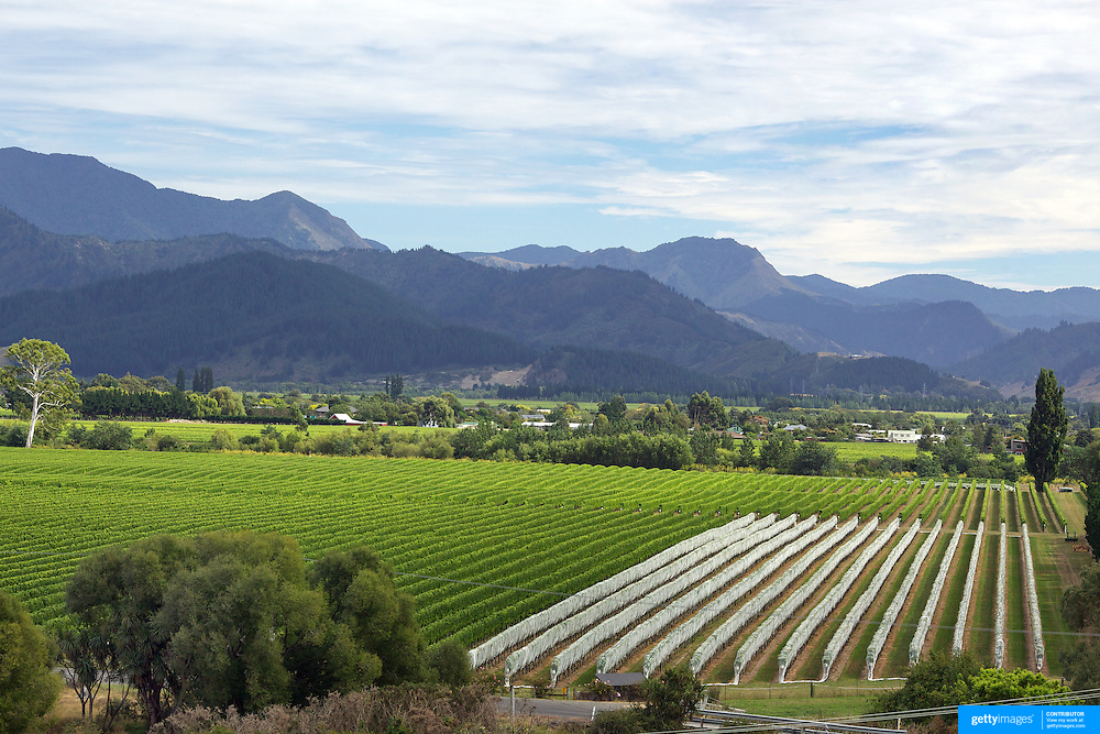 The view of the vineyards in the Marlborough Wine Region from the tower at Highfield Estate WInery,  Brookby Road, Blenheim, Marlborough. New Zealand..Established in 1989, Highfield is a boutique Marlborough winery  owned by Shin Yokoi and Tom Tenuwera. . Highfield is surrounded by a beautiful five acre pinot noir block, situated on the Brookby Ridge and signposted by the iconic tower...The Marlborough wine region is New Zealand's largest wine producer. The Marlborough wine region has earned a global reputation for viticultural excellence since the 1970s. It has an enviable international reputation for producing the best Sauvignon Blanc in the world. It also makes very good Chardonnay and Riesling and is fast developing a reputation for high quality Pinot Noir. Of the region's ten thousand hectares of grapes (almost half the national crop) one third are planted in Sauvignon Blanc. Marlborough, New Zealand, 13th February 2011. Photo Tim Clayton