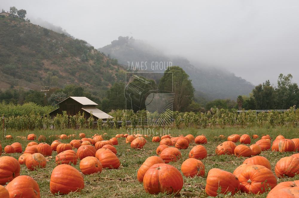 Landscape orientation of a pumpkin patch in October