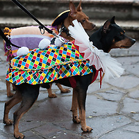 VENICE, ITALY - FEBRUARY 19:  Two dogs dressed with carnival costume walk in central Venice on February 19, 2012 in Venice, Italy.  The annual festival, which lasts nearly three weeks, will see the streets and canals of Venice filled with people wearing highly-decorative and imaginative carnival costumes and masks.  (Photo by Marco Secchi/Getty Images)