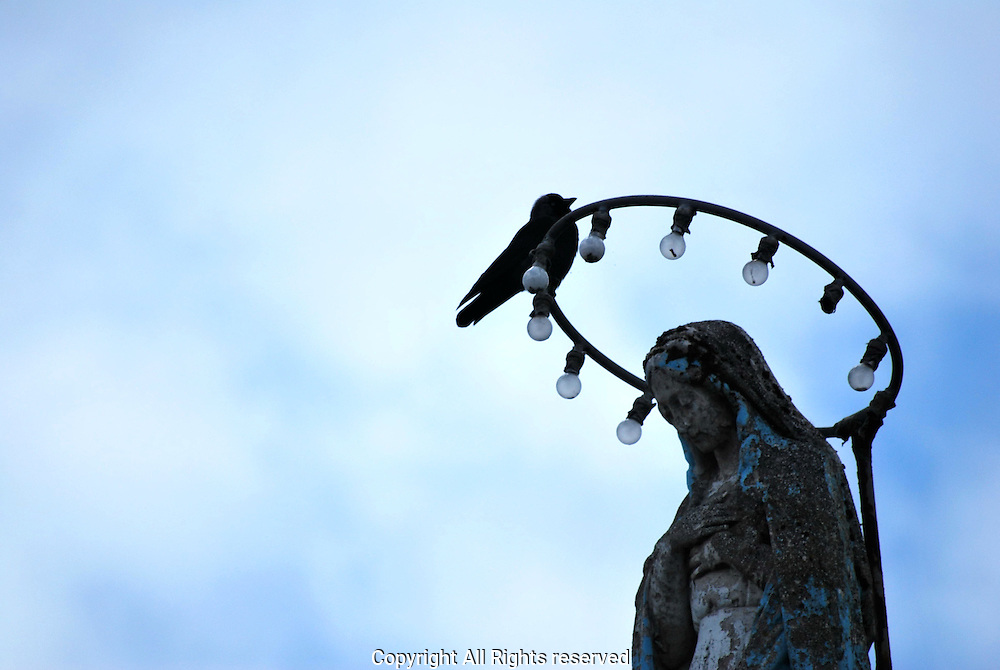 A crow rests on the Halo of the Virgin Mary
