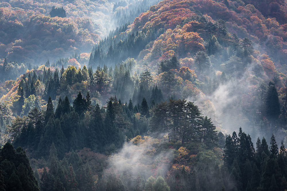 The sunlight shines through the early morning mist rising from the forested mountains that surround the area of Shirakawa-go, Gifu prefecture, in the japanese island of Honshu.