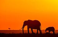 Elephants at dawn, Serengeti National Park, Tanzania
