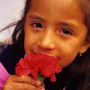 Ypung Ecuadoran girl smells the roses.