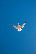 Feeding the seagulls along the boardwalk in Old Town Bandon Oregon