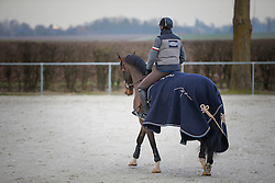 Wathelet Gregory, (BEL), Tefnout d'Ouilly<br /> Ecurie Whatelet - Couthuin 2015<br /> © Hippo Foto - Dirk Caremans<br /> 21/01/15